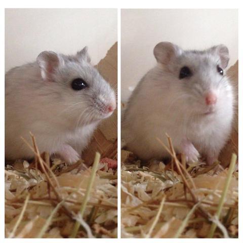 Das ist meine kleine Erdnuss❤️ - (Tiere, Haustiere, Hamster)