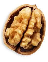 Ist es Zufall, dass Walnüsse ungefähr wie Gehirne aussehen?