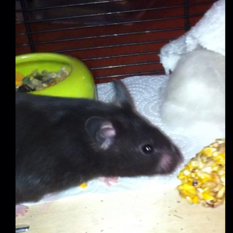 Hamster oder etwas anderes vielleicht   - (Maus, Hamster, Ratten)