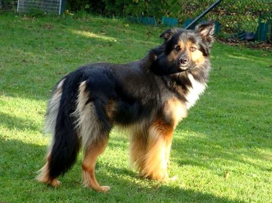 gelbbacke - (Tiere, Hund, Haustiere)