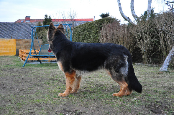 Yomi - (Tiere, Hund, Haustiere)