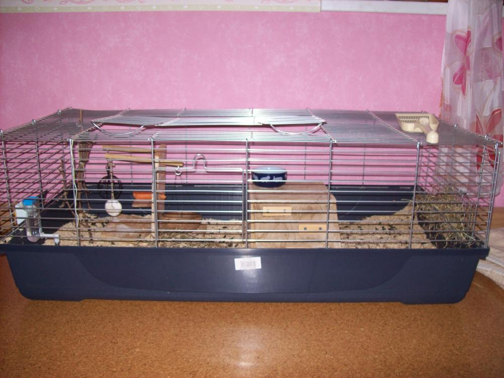 ist mein k fig f r die meeris gro genug meerschweinchen meerschweinchen kaefig. Black Bedroom Furniture Sets. Home Design Ideas