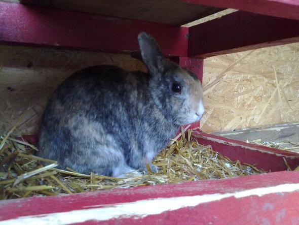 Max - (Tiere, Kaninchen, Tierarzt)