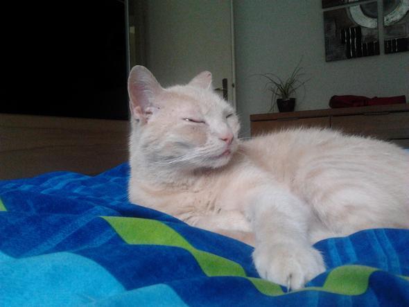 Mein Kater - (Tiere, Katze, Kater)