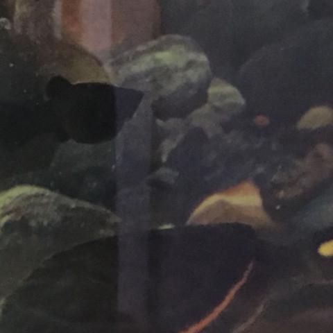 Fisch - (schwanger, Fische, Aquarium)