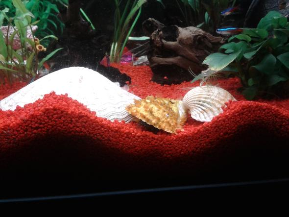 so sieht es jetzt aus - (Fische, Aquarium, Aquaristik)