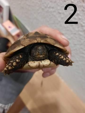 Schildkröte Gestorben
