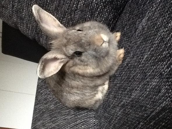 Das ist sie  - (Tiere, Kaninchen)