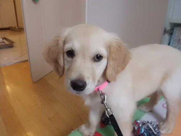 2 Monate - (Hund, Rasse, Reinrassig)