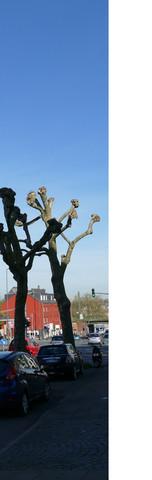 Kahler Baum - (Baum, Äste, rueckschnitt)