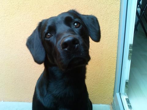 - (Hund, Tierarzt, hundetrainer)