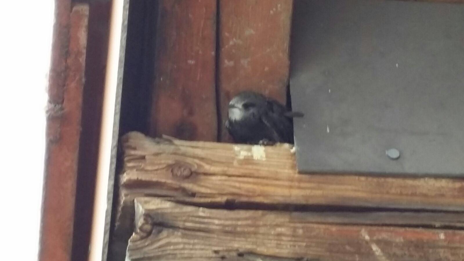jungvogel im nest ohne eltern was tun v gel vogelnest. Black Bedroom Furniture Sets. Home Design Ideas
