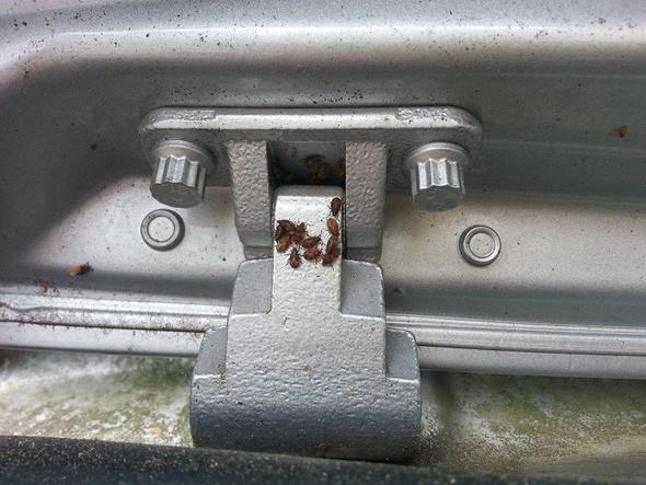 In den Scharnieren - Kofferraum - (Insekten, Kaefer, Schädlinge)