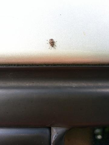 Nahaufnahme - (Insekten, Kaefer, Schädlinge)