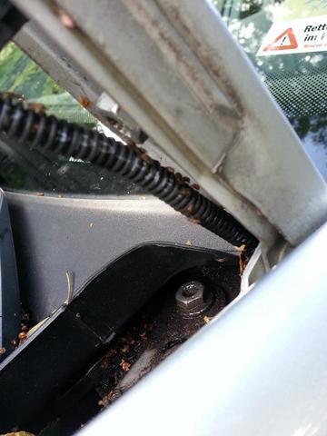 Unter der Motorhaube oben rechts am Kabel - (Insekten, Kaefer, Schädlinge)