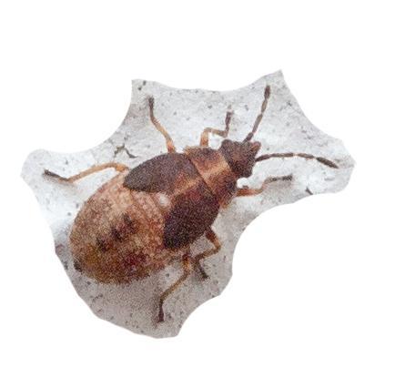 Käfer an der Wand - (Käfer, Schädlinge)