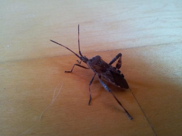 Kafer Bestimmen Wienerwald Tiere Insekten Entomologie
