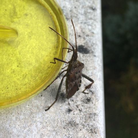Der gefundene Käfer  - (Biologie, Wohnung, finden)