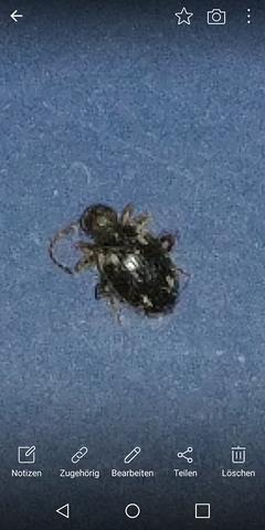 k fer im bad und schlafzimmer was kann das sein insekten ungezieferbek mpfung ungeziefer in. Black Bedroom Furniture Sets. Home Design Ideas