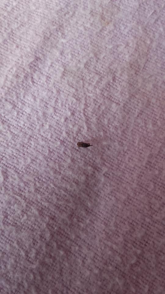 Käfer Im Bett
