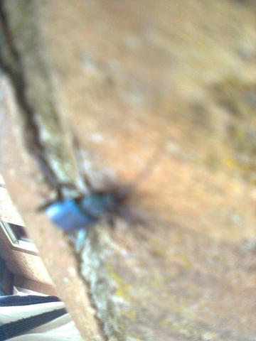 Von unten/seite - (Käfer, Bestimmung)