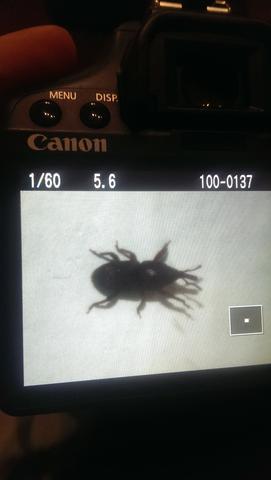 Käfer im Meerschweinchenfutter/heu!