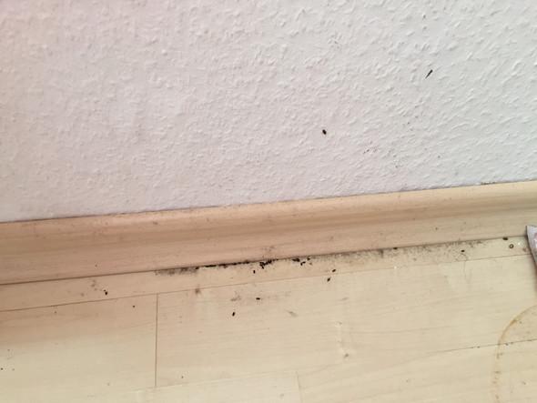 Käfer 2 - (Tiere, Hygiene, Ekel)