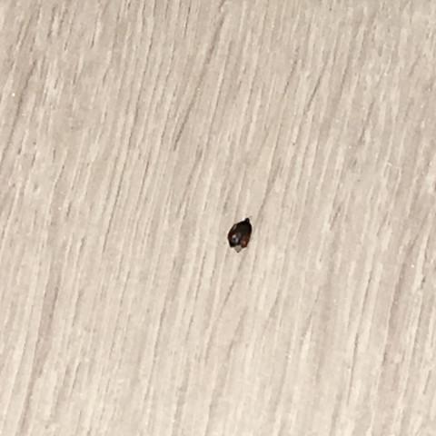 Was sind das für käfer? - (Zimmer, Wand, Boden)