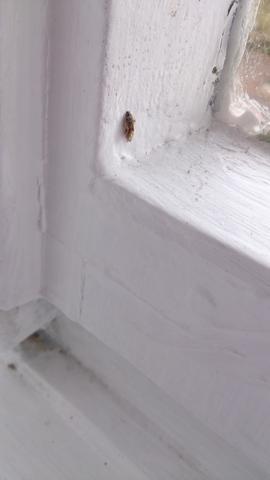 Kafer In Der Wohnung Fenster Ungeziefer Schadlinge