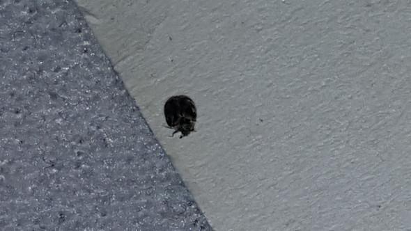 B2 - (Insekten, Kaefer)