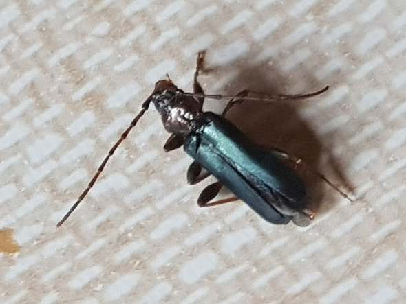 Kaferplaage Was Sind Das Fur Kafer Insekten Schadlingsbekampfung