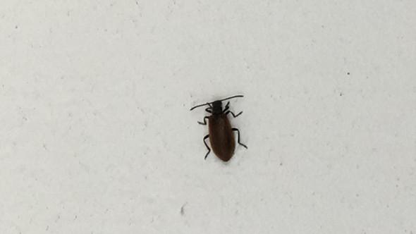 Käferplage