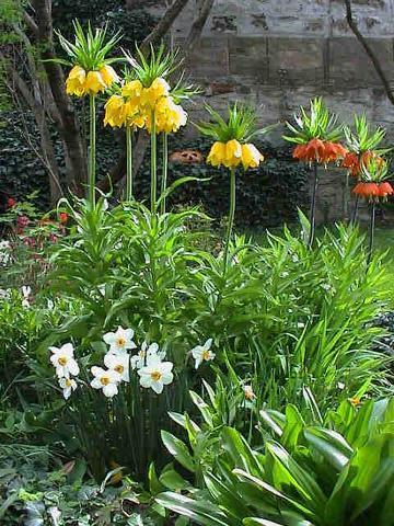 Frühling - (Samen, säen, frühblüher)