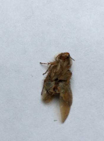 Bild 1 - (Insekten, Ungeziefer, Kakerlaken)