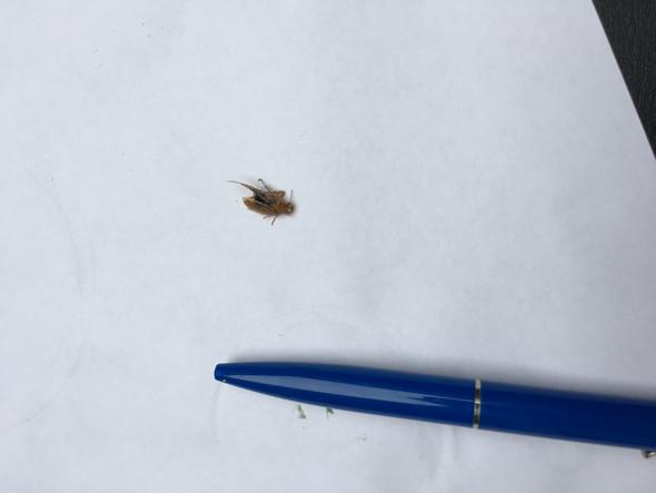 Bild 3 - (Insekten, Ungeziefer, Kakerlaken)