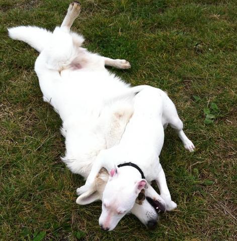 Spielen =D - (Hund, Gesetz, Tierschutz)