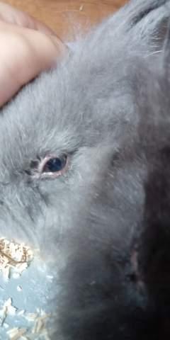Kaninchen Augen Tränen einbisschen?