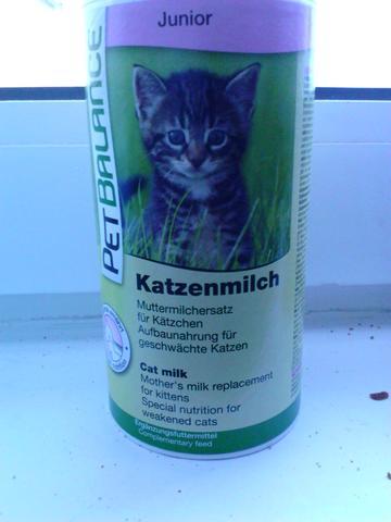 Katzen Milch - (Gesundheit, Tiere, Baby)