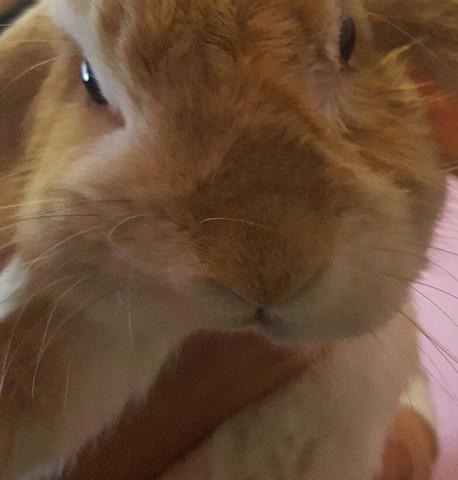 Kaninchen, schiefe Schnauze - (Gesundheit, Kaninchen)