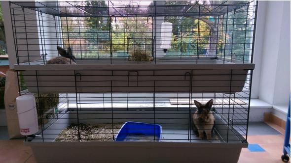 kaninchen haltung fragen