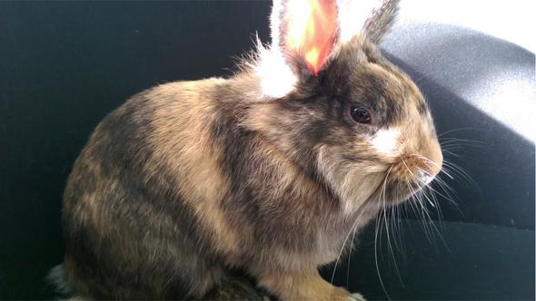 Kaninchen madenbefall überlebenschance. Kaninchen Info