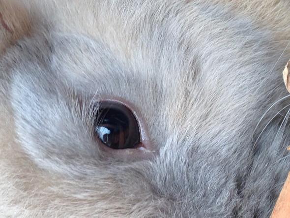 Bild 1 - (Tiere, Kaninchen)