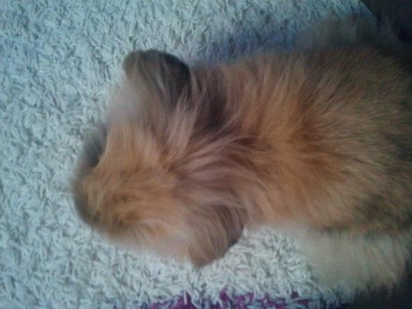 weibchen davor - (Kaninchen, kratzen)