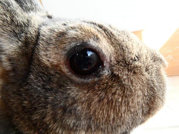 Krümel1 - (Augen, Kaninchen, Tränen)