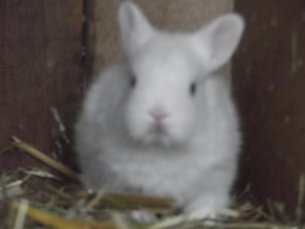 Kaninchenbaby - (Alter, Kaninchen, Kaninchenbabys)