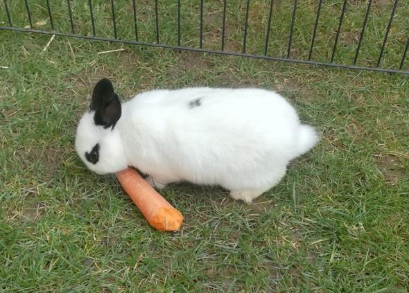 Kaninchenname Mannlich Tiere Haustiere Namen
