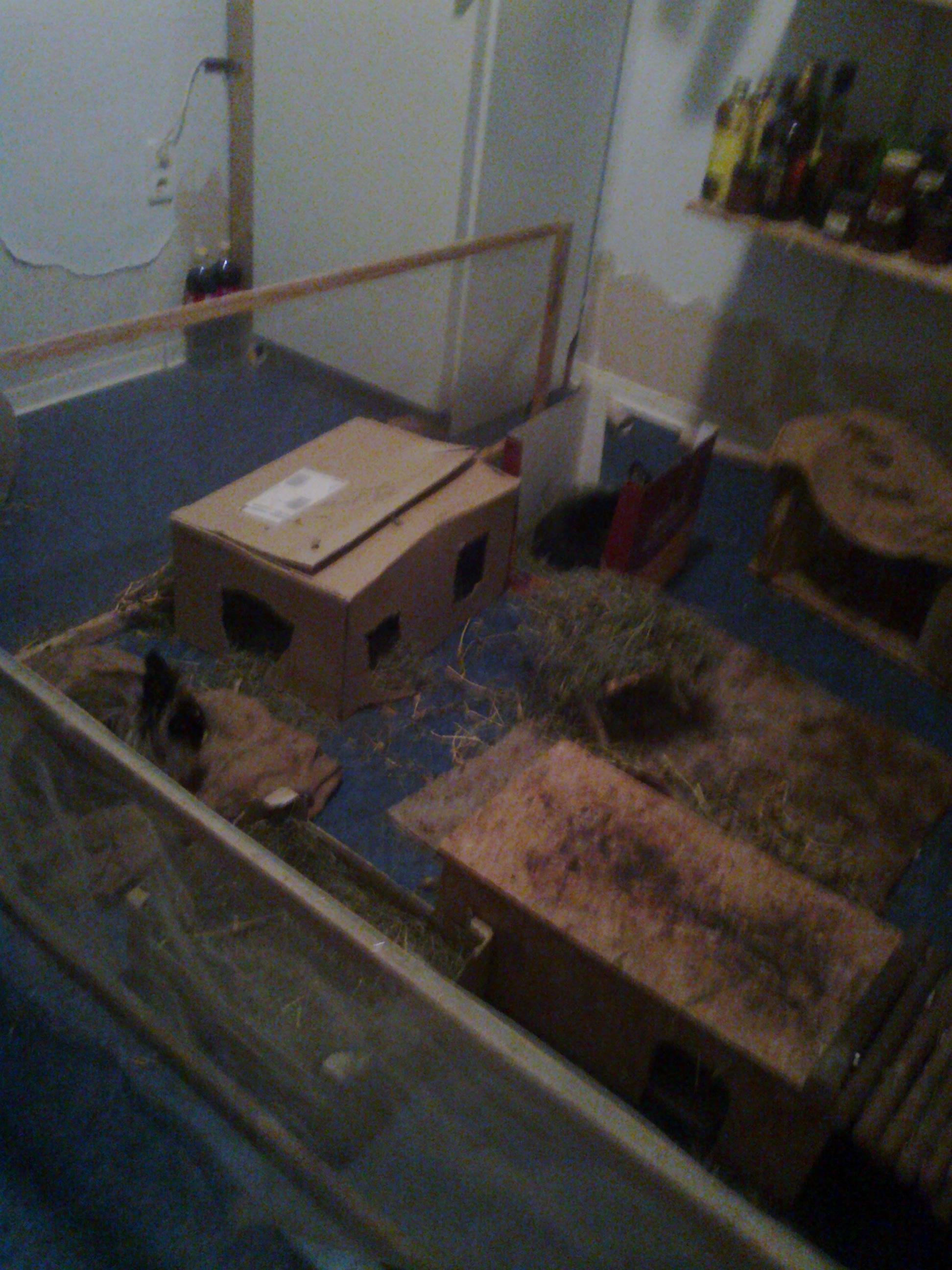 das beste von spielzeug f r kaninchen selber basteln tierspielzeug. Black Bedroom Furniture Sets. Home Design Ideas