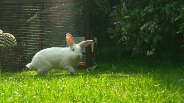 Segelohr im Garten - (Kaninchen, Hasen, Inneneinrichtung)
