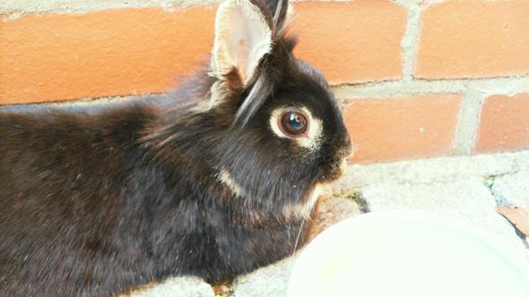 Wuschel nach Erkundung der Terassse - (Kaninchen, Hasen, Inneneinrichtung)