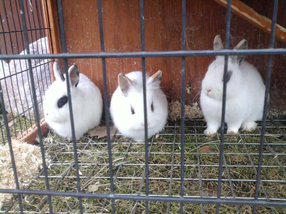kaninchenstall kan das gitter am boden gef hrlich sein tiere haustiere kaninchen. Black Bedroom Furniture Sets. Home Design Ideas